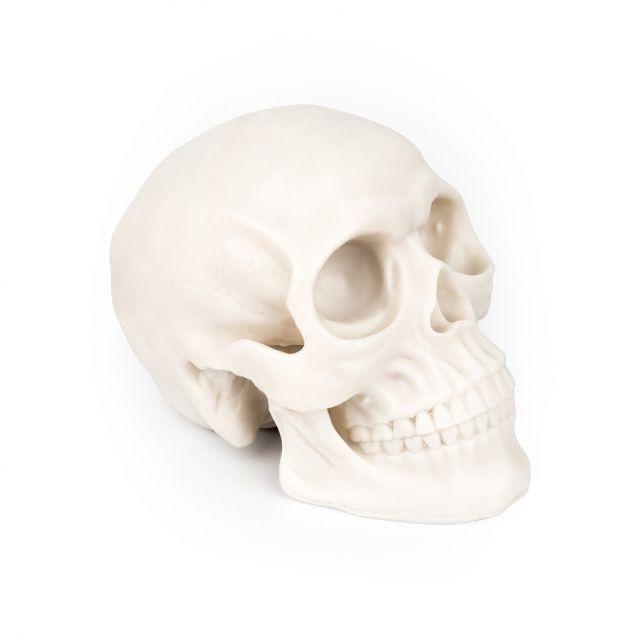 Silikonová lebka na cvičení - Silicone skull